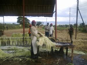 Bundling the sisal